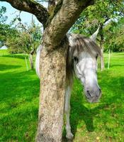 White horse beside a tree photo