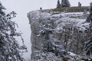 Snow covered trees at the Creux du Van
