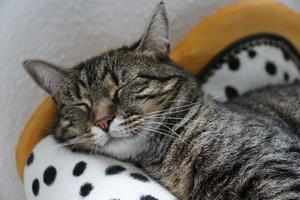 Cute sleeping cat photo