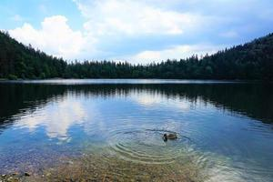 Lake in the forest photo