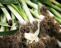 sistema de raíces en puerros