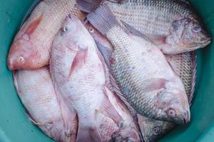 secchio di pesce