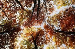 prachtig gekleurde bomen in de herfst