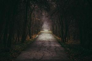 Road in a dark forest photo