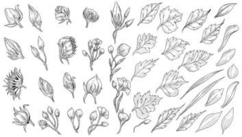 Leaf sketch set design