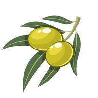 Green olive isolated on white background vector