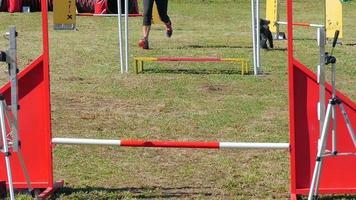 cane in azione al rallentatore di competizione di agilità
