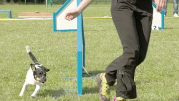 un cane in una mostra canina con il suo trainor fs700 odyssey 7q