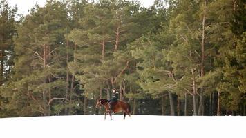 cavaliere cavalca un cavallo