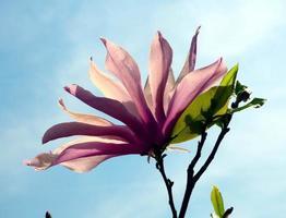 Sunlight through a flower