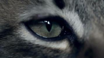 Eye of a kitten. Extreme close up video
