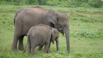 un jeune éléphant juste à côté d'un adulte