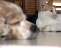 cochilo de cachorro e gato video