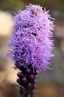 Close-up of a purple flower