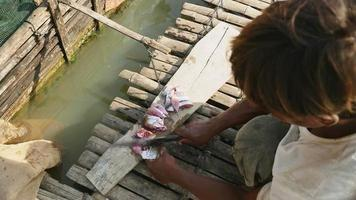 fish farmer chopping fish for feeding fish in a bamboo crate fixed to a houseboat