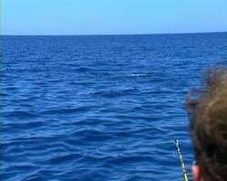 baja fishing dorado 04