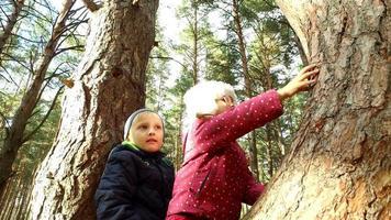 niño y niña sentados en un árbol grande. los niños han plantado un pino y están felices. domingo feriado con niños en el parque. video