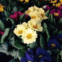 Colorful flowers in spring photo