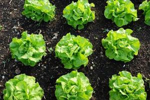 ensaladas en el jardín