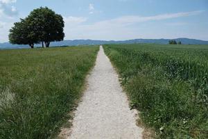 prairie en suisse photo