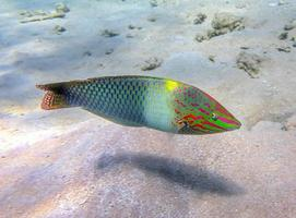 Colorful sea damselfish photo