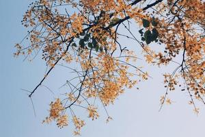 árvore de flor amarela foto