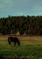 Brown horse standing on grass field