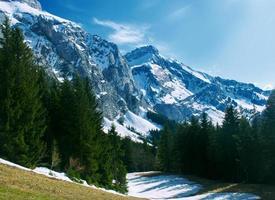 Green pine trees on mountain photo