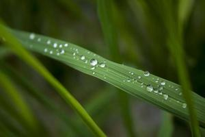 Dew drops on a blade of grass photo