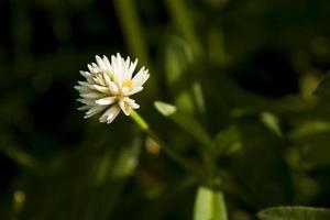 vista de una flor blanca