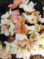 White and pink flowers photo