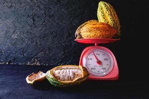 Fresh cocoa harvest on scale