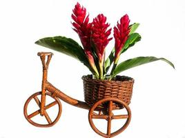 Flowers on a wooden bike