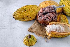 cacao fresco con mazorcas de cacao y granos de cacao