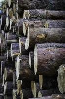 Close up of fire logs