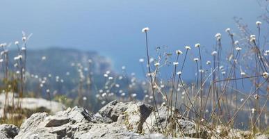 Blooming coastal flowers