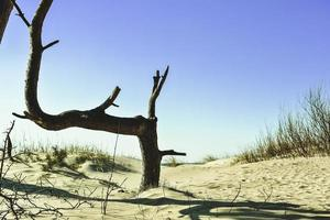 Coastal tree branch in the sand