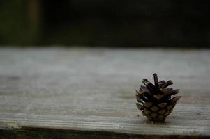 pomme de pin brune naturelle photo
