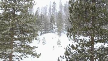 neve caindo nas árvores