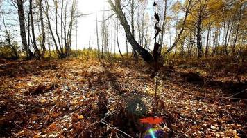 foresta d'autunno
