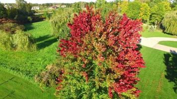Unique Aerial Perspective of Fall Colors, Maple Tree in Wind