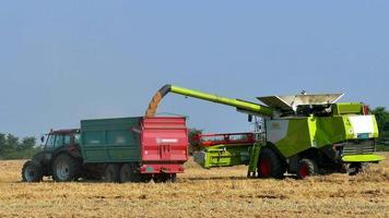 Moissonneuse-batteuse et tracteur avec remorque sur le blé de récolte video
