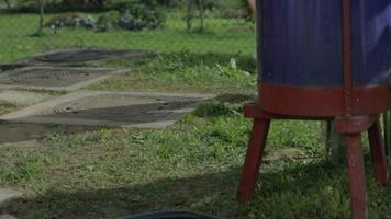 Der junge Imker kommt, um in den Bienenstock zu schauen