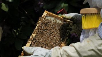 cu Imker mit Bienen auf Wabe