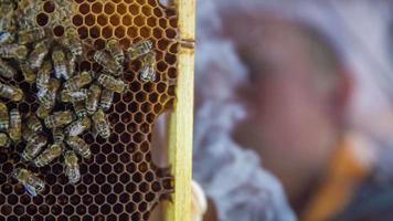 appannando il pannello pieno di api