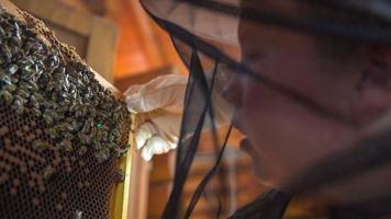 bambino apicoltore che ha in mano un pannello dall'alveare