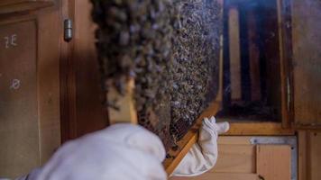 faire glisser le panneau de bois dans la ruche