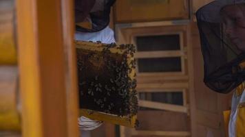 paio di apicoltori che controllano le api
