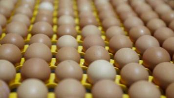 Auswahl von Industrieanlagen für Eier