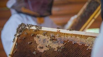 control ritual de las abejas